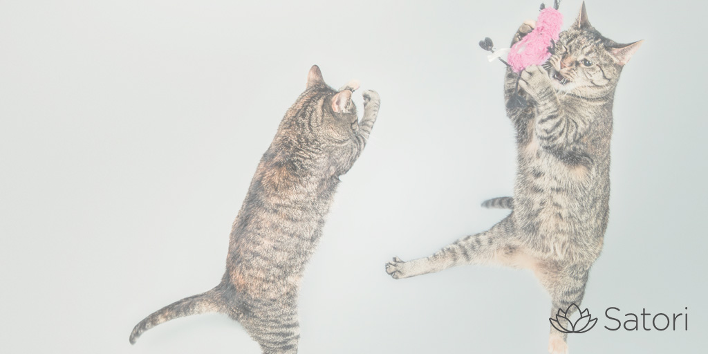 Time Drain: Client Management (and How to Herd Cats)